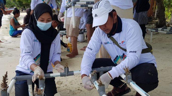 IPC Panjang Lakukan Penanaman dan Konservasi Terumbu Karang di Laut Pahawang