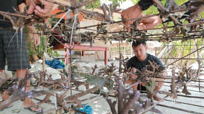 Jaga Ekosistem Bawah Laut, Tegal Mas Resort Tanam 250 Bibit Terumbu Karang