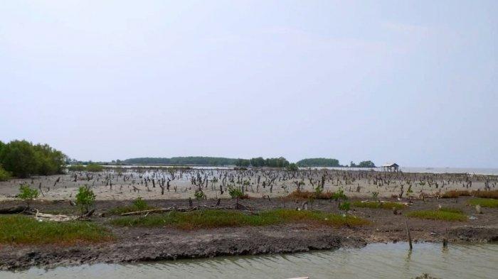 Hutan Mangrove Alih Fungsi Jadi Sawah, Nelayan Tulangbawang Barat Kesulitan Cari Ikan