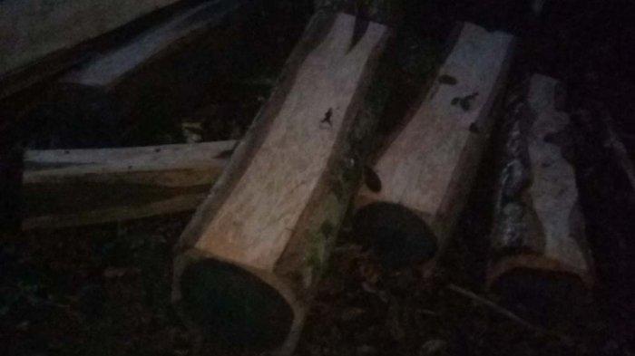 Polhut Lampung Amankan 5 Kubik Kayu Sonokeling Hasil Ilegal Logging dan Dua Pelaku