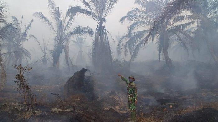 Kebakaran Lahan Sawit PT SIP Seluas 200 Hektare, TNI-Polri 10 Jam Lebih Berjibaku Padamkan Api