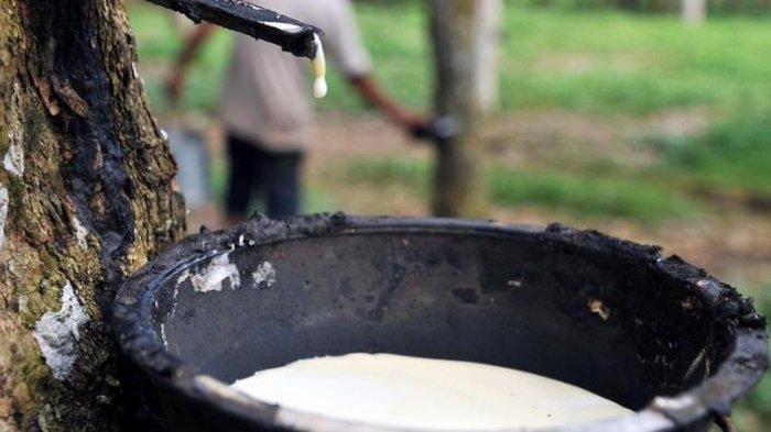 Kejari Lampung Timur Setop Penuntutan, Kasus Ayah Curi Getah Karet Demi Susu Anak
