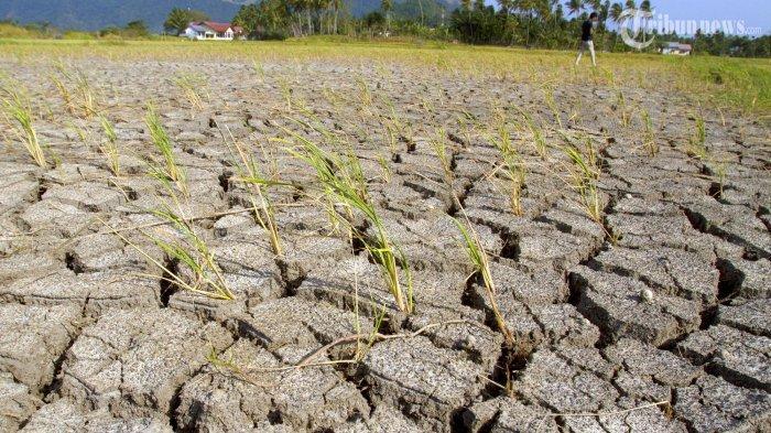 BMKG Lampung Prediksi Puncak Musim Kemarau Terjadi Pada Agustus hingga September 2020