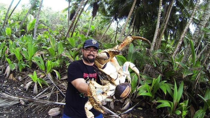 Turis Nekat Pegang Kepiting Raksasa yang Mematikan untuk Berpose Bersama