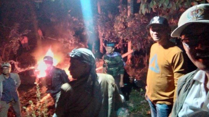 Kisah Kepala TNBBS Halau Kawanan Gajah, Terjebak 5 Jam di Atas Pohon Petai