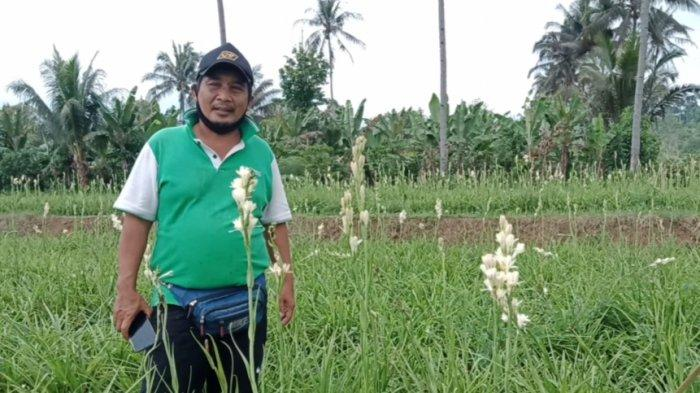 Kisah Petani Bunga Sedap Malam Asal Tanggamus, Supriadi Tak Bisa Penuhi Permintaan Akibat Hujan