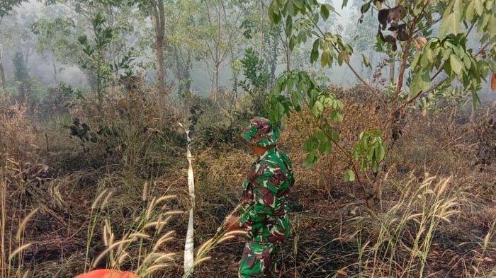 Kodim, Polres dan BPBD Way Kanan Bersinergi Padamkan Kebakaran Lahan Perkebunan Karet PTPN VII