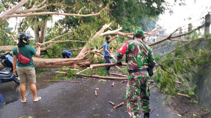 Babinsa Koramil 410-06/Kedaton Sertu When Shen Bantu Evakuasi Pohon Tumbang di Rajabasa