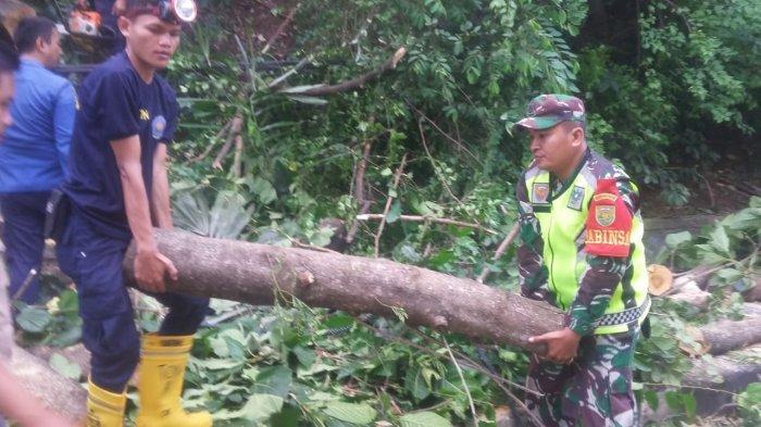 Babinsa Bantu Evakuasi Pohon Tumbang