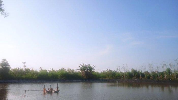 Saluran Irigasi Tambak Dipasena Tulangbawang Butuh Pengerukan karena Alami Pendangkalan