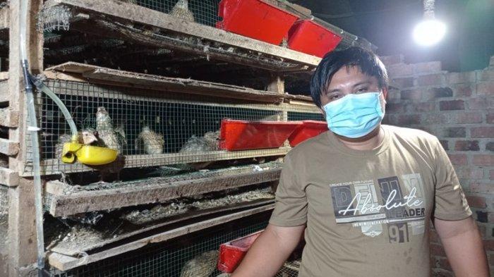 Kuliner Lampung, Lorek-lorek Mesuji Jual Telur Puyuh Kualitas Super Rp 30 Ribu per Kg