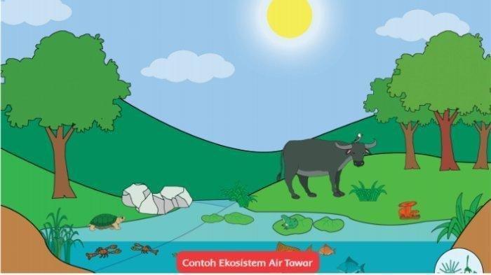 Apa Itu Ekosistem, Berikut Pengertian Ekosistem