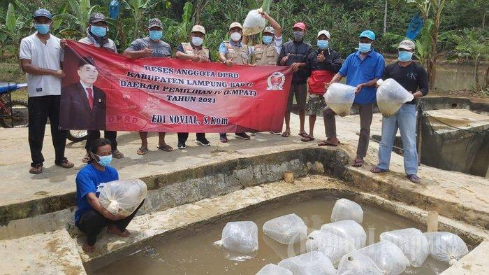 Kunker Reses Tahap I, DPRD Lampung Barat Tebarkan 40.000 Bibit Nila
