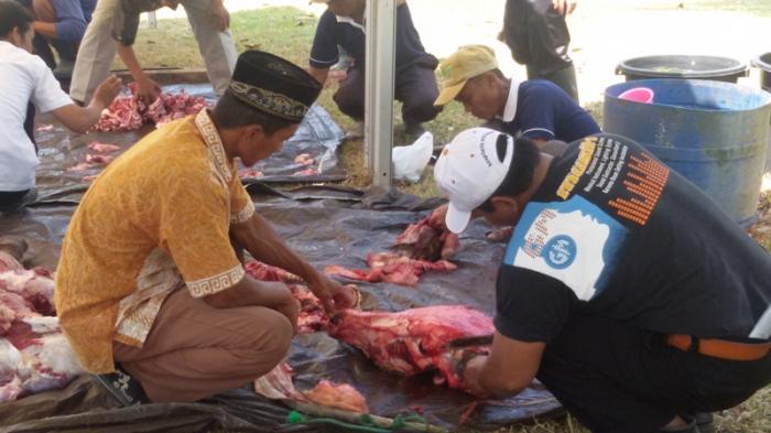 Pemkab Mesuji Tiadakan Salat Idul Adha dan Kurban