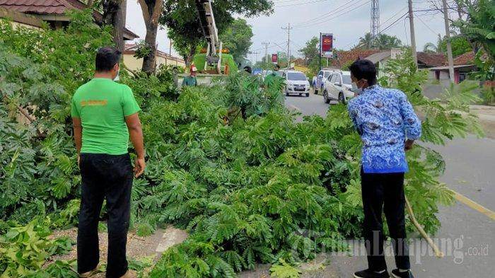 Langkah DLH Pringsewu Antisipasi Pohon Tumbang di Jalinbar saat Hujan Deras