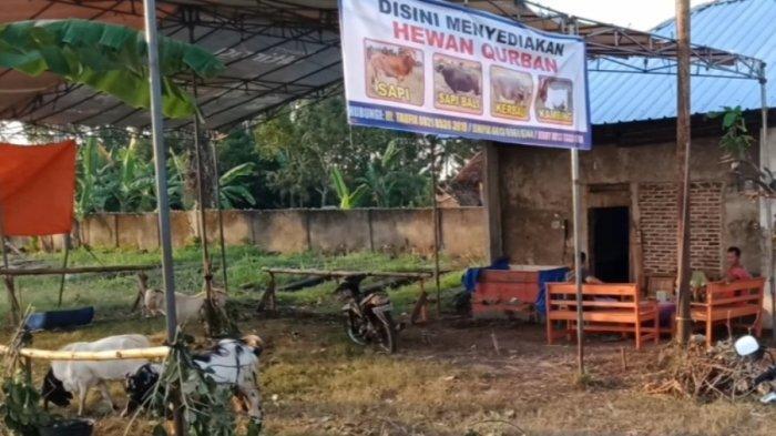 Penjual Hewan Kurban di Talang Padang Sediakan Layanan Antar Gratis ke Tiga Wilayah Kecamatan