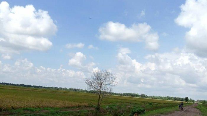 Besok Bupati Tulangbawang Winarti Panen Raya Padi di Kecamatan Rawapitu