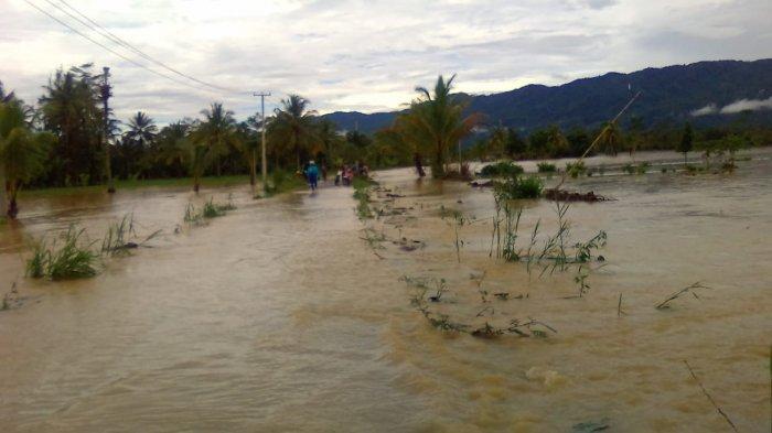 Sungai Way Haru Meluap, Puluhan Hektare Sawah di Lampung Barat Terendam Banjir