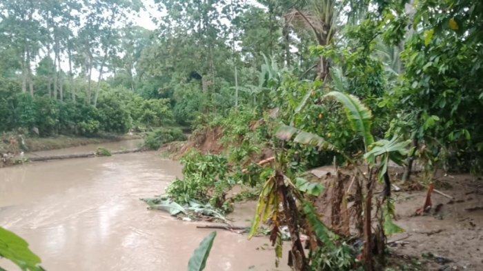 Tanggul Sungai Way Bulok Tanggamus Jebol sejak 5 Tahun Lalu