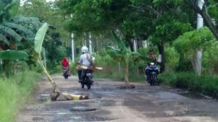 Warga Way Lubuk Lamsel Tanam Jalan Rusak dengan Pohon Pisang