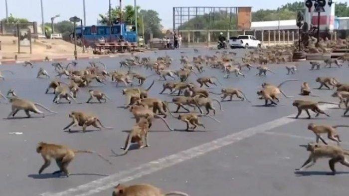 7 Orang Tewas dalam Bentrokan Antargeng Monyet