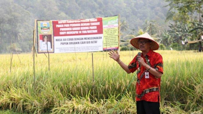 Bupati Pesisir Barat Hadiri Acara Panen Padi Bersama di Kecamatan Karya Penggawa