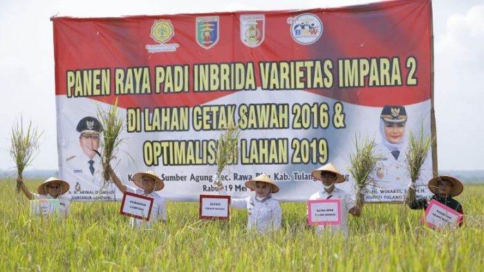 Panen Raya Padi di Rawapitu, Bupati Winarti: Sektor Pertanian Punya Andil Dongkrak Ekonomi