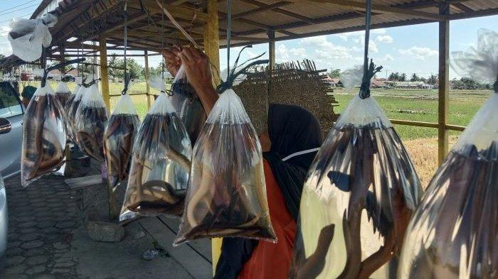 80 Kg Belut Terjual di Tepi Jalinbar Pringsewu dalam Sebulan