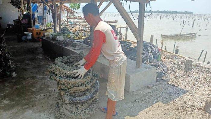 Pembudidaya Kerang Hijau Merugi Akibat Gelombang Tinggi di Pantai Timur Laut Lampung Selatan