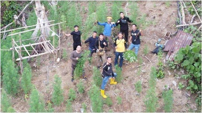 Penampakan Ladang Ganja 1 Hektare di Bukit Barisan TNKS Muratara
