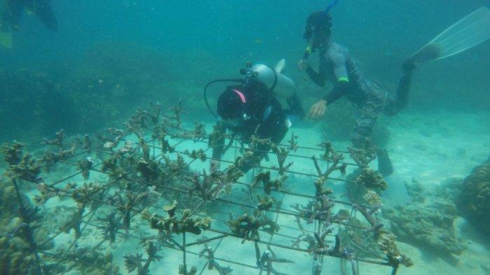 BERITA FOTO - Penanaman 250 Bibit Terumbu Karang di Pantai Pulau Tegal Mas