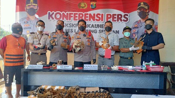 BREAKING NEWS Kirim Kulit Harimau via Ekspedisi, Warga Jawa Barat Diamankan Polres Lampung Selatan