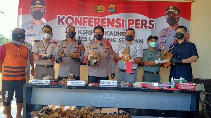 Kapolres Lampung Selatan AKBP Edwin dan jajaran menunjukkan barang bukti kulit harimau dalam konferensi pers di kantor KSKP Bakauheni, Jumat (10/9/2021).