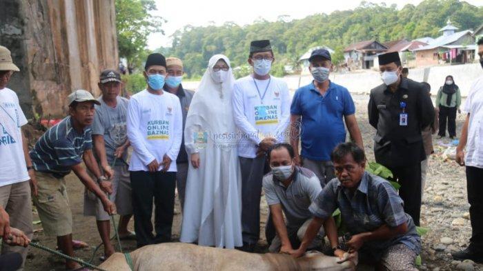 Agus Istiqlal Hadiri Penyembelihan Hewan Kurban Baznas Kabupaten Pesisir Barat