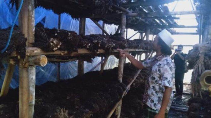 Petani Jamur di Mesuji Dapat Bantuan UMKM Sebesar Rp 4 Juta