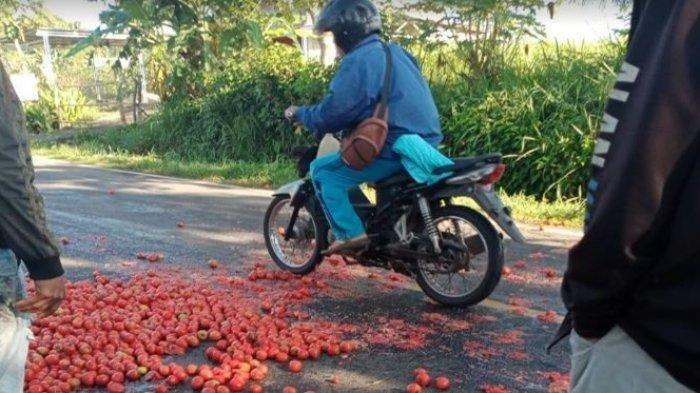 Petani Buang Tomat Hasil Panen di Jalan Raya, Kecewa Harga Tomat Merosot Tajam