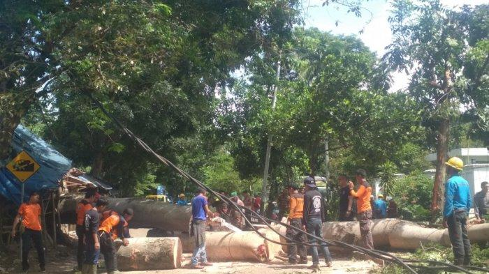Pohon Sengon yang Tumbang di Bandar Lampung Ternyata Juga Timpa Motor