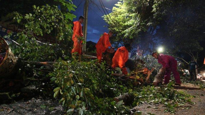Evakuasi Pohon Tumbang di Segala Mider Butuh 20 Menit, Arus Lalu Lintas Sudah Normal