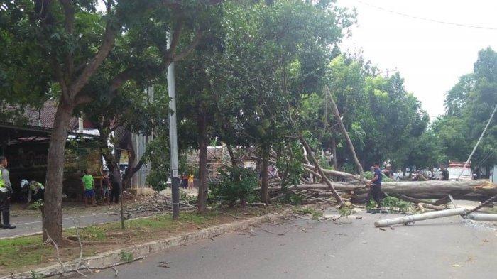 Polisi Tewas Tertimpa Pohon Tumbang Usai Amankan Kampanye
