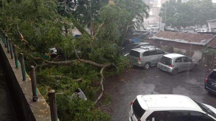 Pohon Tumbang di Kota Metro, Saksi Mata Sebut Bergoyang Kencang Sebelum Roboh