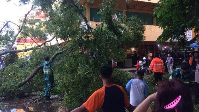 Petugas melakukan evakuasi terhadap pohon tumbang di Kota Metro yang terjadi saat hujan deras mengguyur pada Jumat (18/12/2020). Pohon Tumbang di Kota Metro, Saksi Mata Sebut Bergoyang Kencang Sebelum Roboh. (Tribunlampung.co.id/Indra Simanjuntak)