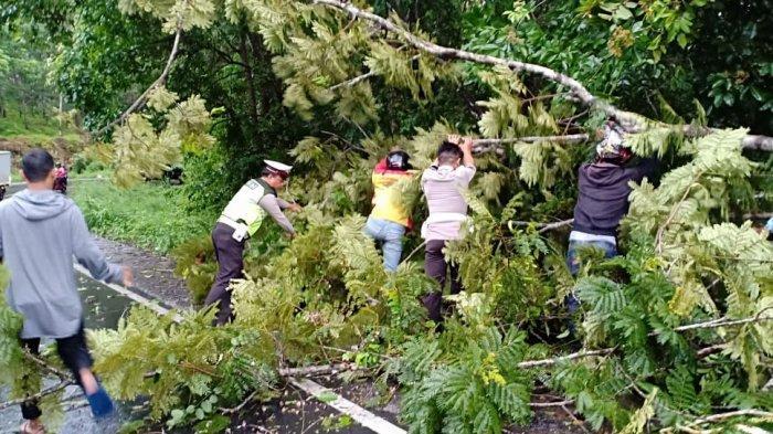 Pohon Tumbang di Jalinsum Way Kanan Akibatkan Macet