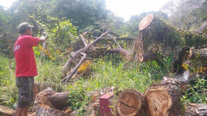 Cerita Mistis di Balik Belum Dievakuasinya Pohon Tumbang Timpa Makam di Bandar Lampung