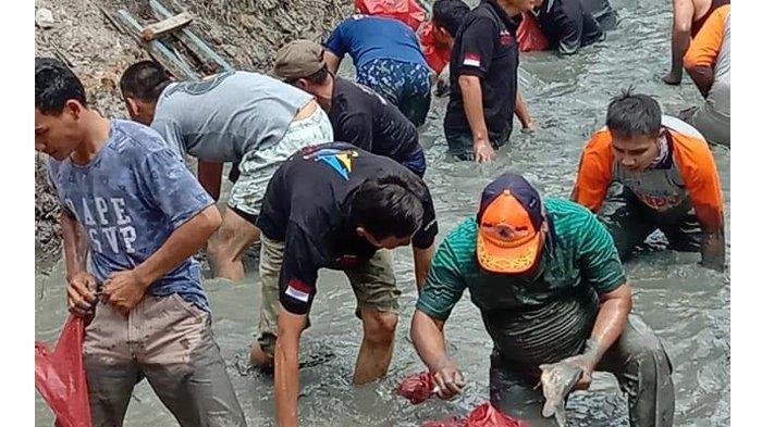 Rangkaian HUT Mesuji Ke-11, Pejabat dan Masyarakat 'Melebung' Tangkap Ikan