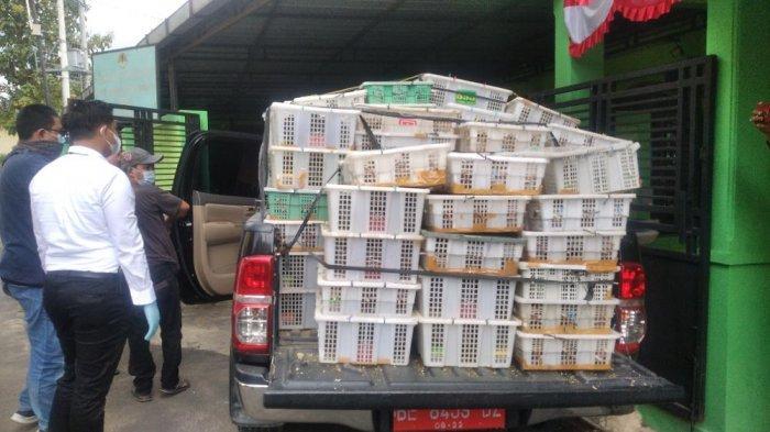 Ribuan Burung dari Pekanbaru Hendak Diselundupkan ke Tangerang
