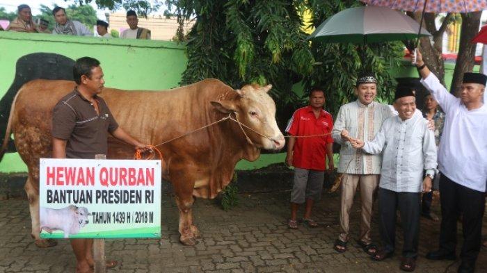 Ridho Resmi Serahkan Sapi Kurban Bantuan Jokowi ke PHBI Lampung