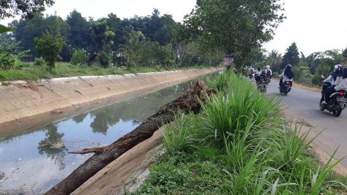 Keluhan Sampah Bekas Pohon Tumbang Akan Ditangani BPBD Metro