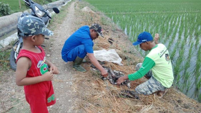 Terkendala Mitos Petani, Dinas Pertanian Pringsewu Adakan Pelatihan Ilmu Pertikusan