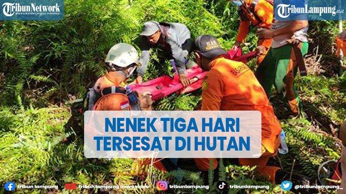 Tiga Hari Tersesat di Hutan, Seorang Nenek Ditemukan Selamat