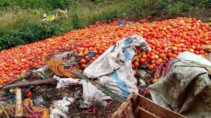 Tak Laku di Pasaran, Agen Sayuran di Lampung Barat Buang Tomat Busuk